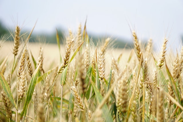 agriculture-arable-blur-265216